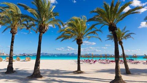 palmbomen op een wit strand